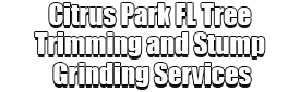 Citrus Park FL Tree Trimming and Stump Grinding Services