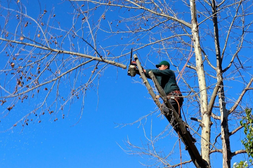 Contact Us-Citrus Park FL Tree Trimming and Stump Grinding Services-We Offer Tree Trimming Services, Tree Removal, Tree Pruning, Tree Cutting, Residential and Commercial Tree Trimming Services, Storm Damage, Emergency Tree Removal, Land Clearing, Tree Companies, Tree Care Service, Stump Grinding, and we're the Best Tree Trimming Company Near You Guaranteed!