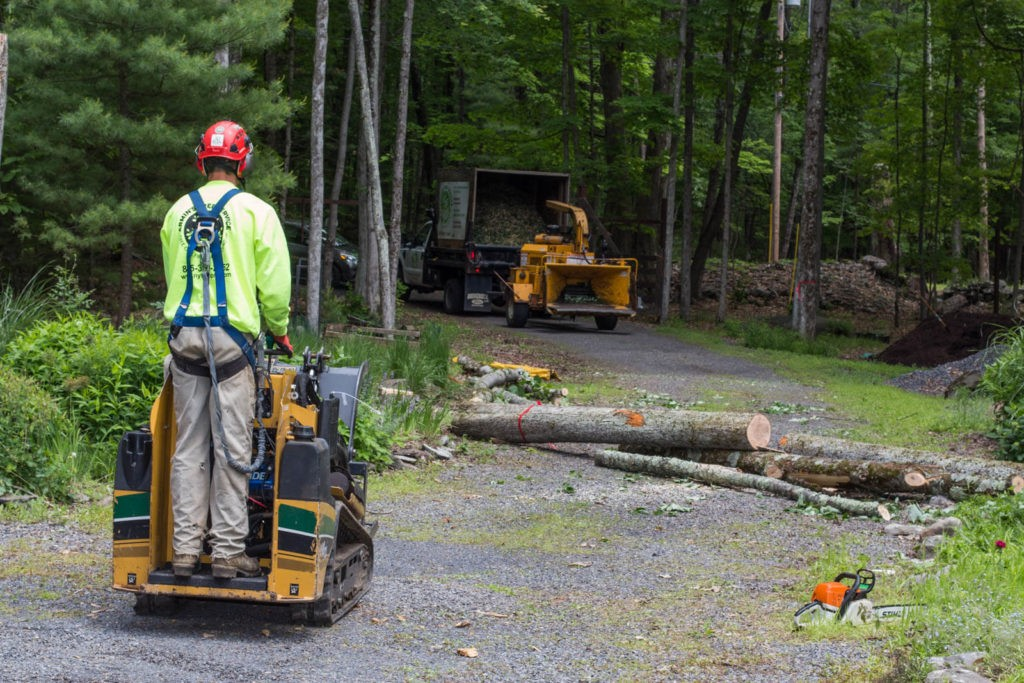 Emergency Tree Removal-Citrus Park FL Tree Trimming and Stump Grinding Services-We Offer Tree Trimming Services, Tree Removal, Tree Pruning, Tree Cutting, Residential and Commercial Tree Trimming Services, Storm Damage, Emergency Tree Removal, Land Clearing, Tree Companies, Tree Care Service, Stump Grinding, and we're the Best Tree Trimming Company Near You Guaranteed!
