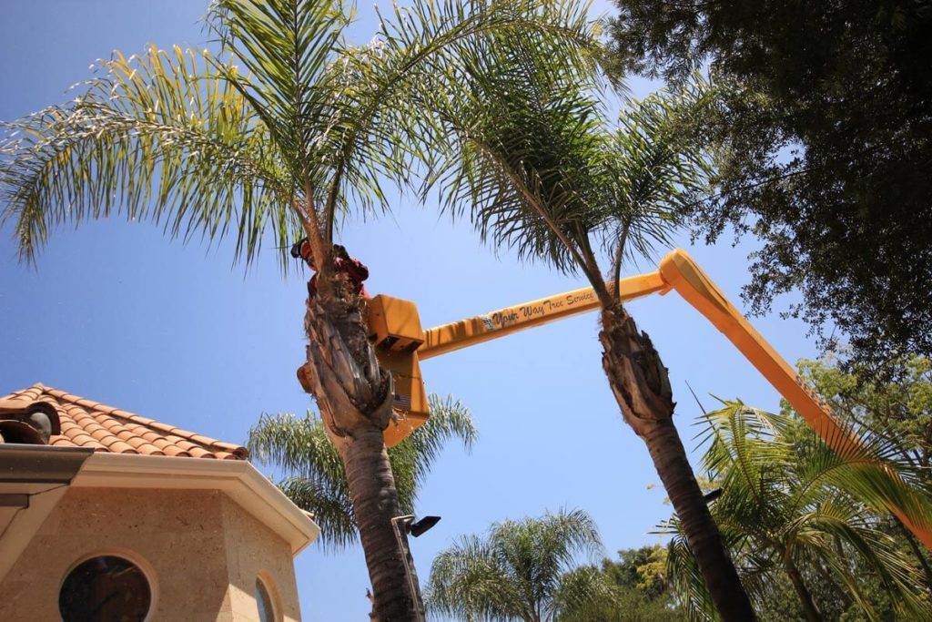 Palm Tree Trimming-Citrus Park FL Tree Trimming and Stump Grinding Services-We Offer Tree Trimming Services, Tree Removal, Tree Pruning, Tree Cutting, Residential and Commercial Tree Trimming Services, Storm Damage, Emergency Tree Removal, Land Clearing, Tree Companies, Tree Care Service, Stump Grinding, and we're the Best Tree Trimming Company Near You Guaranteed!