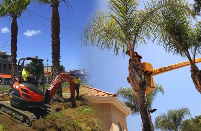 Palm tree trimming & palm tree removal-Citrus Park FL Tree Trimming and Stump Grinding Services-We Offer Tree Trimming Services, Tree Removal, Tree Pruning, Tree Cutting, Residential and Commercial Tree Trimming Services, Storm Damage, Emergency Tree Removal, Land Clearing, Tree Companies, Tree Care Service, Stump Grinding, and we're the Best Tree Trimming Company Near You Guaranteed!