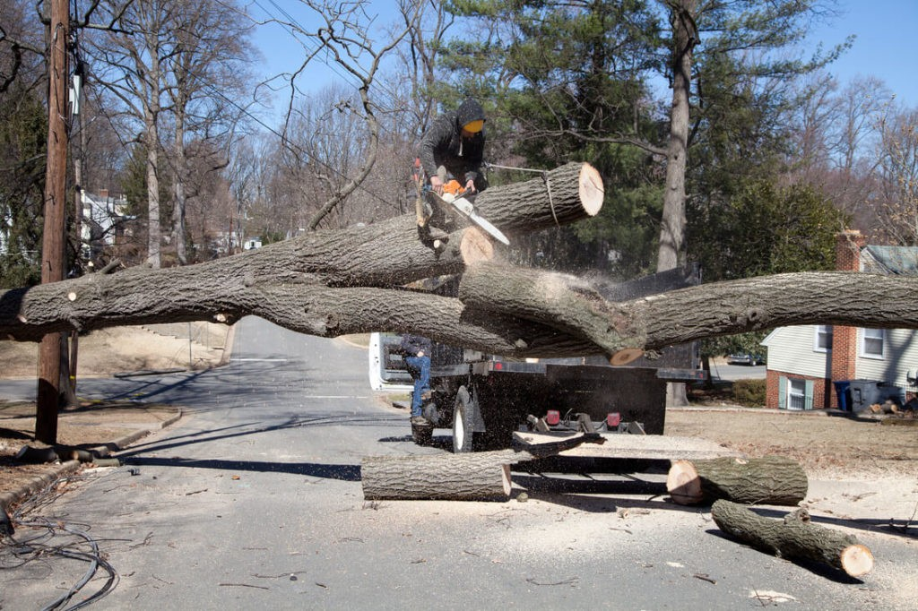 Residential Tree Services-Citrus Park FL Tree Trimming and Stump Grinding Services-We Offer Tree Trimming Services, Tree Removal, Tree Pruning, Tree Cutting, Residential and Commercial Tree Trimming Services, Storm Damage, Emergency Tree Removal, Land Clearing, Tree Companies, Tree Care Service, Stump Grinding, and we're the Best Tree Trimming Company Near You Guaranteed!