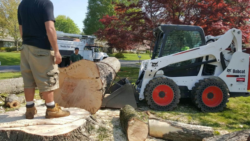 Services-Citrus Park FL Tree Trimming and Stump Grinding Services-We Offer Tree Trimming Services, Tree Removal, Tree Pruning, Tree Cutting, Residential and Commercial Tree Trimming Services, Storm Damage, Emergency Tree Removal, Land Clearing, Tree Companies, Tree Care Service, Stump Grinding, and we're the Best Tree Trimming Company Near You Guaranteed!