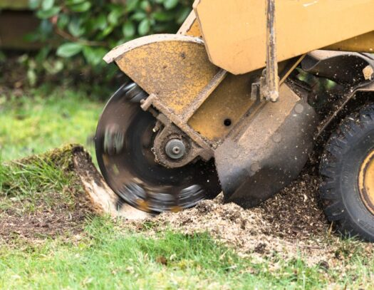 Stump Grinding-Citrus Park FL Tree Trimming and Stump Grinding Services-We Offer Tree Trimming Services, Tree Removal, Tree Pruning, Tree Cutting, Residential and Commercial Tree Trimming Services, Storm Damage, Emergency Tree Removal, Land Clearing, Tree Companies, Tree Care Service, Stump Grinding, and we're the Best Tree Trimming Company Near You Guaranteed!
