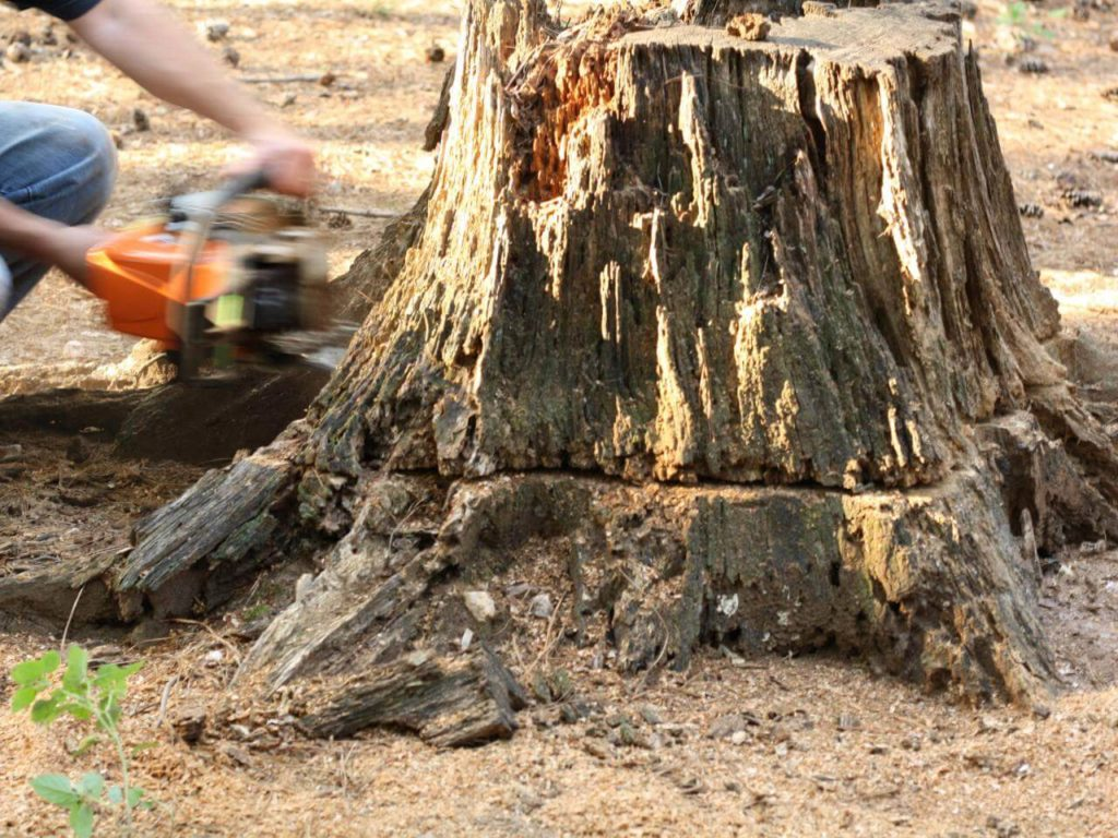 Stump Removal-Citrus Park FL Tree Trimming and Stump Grinding Services-We Offer Tree Trimming Services, Tree Removal, Tree Pruning, Tree Cutting, Residential and Commercial Tree Trimming Services, Storm Damage, Emergency Tree Removal, Land Clearing, Tree Companies, Tree Care Service, Stump Grinding, and we're the Best Tree Trimming Company Near You Guaranteed!