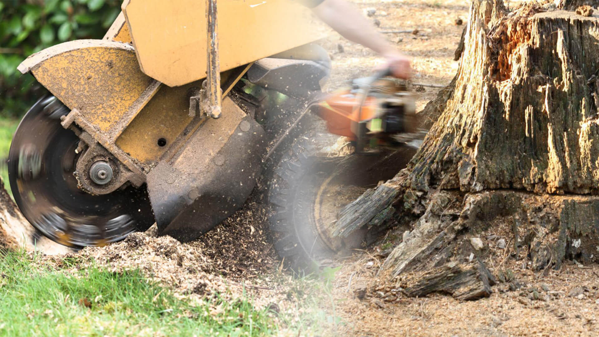 Stump grinding & removal-Citrus Park FL Tree Trimming and Stump Grinding Services-We Offer Tree Trimming Services, Tree Removal, Tree Pruning, Tree Cutting, Residential and Commercial Tree Trimming Services, Storm Damage, Emergency Tree Removal, Land Clearing, Tree Companies, Tree Care Service, Stump Grinding, and we're the Best Tree Trimming Company Near You Guaranteed!