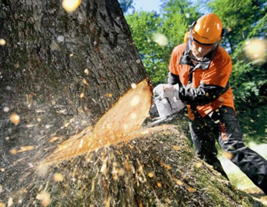 Tree Cutting-Citrus Park FL Tree Trimming and Stump Grinding Services-We Offer Tree Trimming Services, Tree Removal, Tree Pruning, Tree Cutting, Residential and Commercial Tree Trimming Services, Storm Damage, Emergency Tree Removal, Land Clearing, Tree Companies, Tree Care Service, Stump Grinding, and we're the Best Tree Trimming Company Near You Guaranteed!