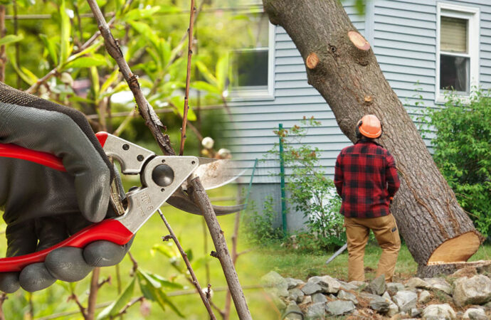 Tree pruning & tree removal-Citrus Park FL Tree Trimming and Stump Grinding Services-We Offer Tree Trimming Services, Tree Removal, Tree Pruning, Tree Cutting, Residential and Commercial Tree Trimming Services, Storm Damage, Emergency Tree Removal, Land Clearing, Tree Companies, Tree Care Service, Stump Grinding, and we're the Best Tree Trimming Company Near You Guaranteed!